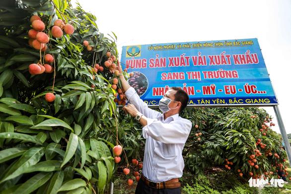 Một ngày, khách Nhật mua gần 20 tấn vải thiều Bắc Giang, giá 340.000 đồng/kg - Ảnh 2.