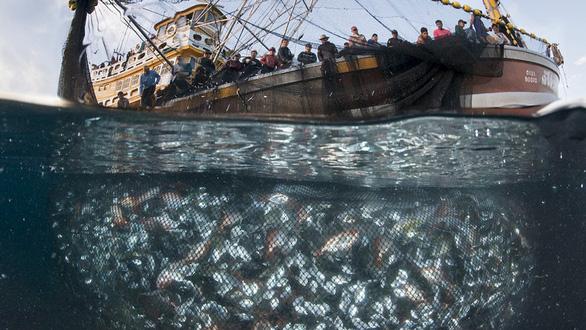 Seaspiracy - Sự thật về nghề cá bền vững - Máu của cá và của đại dương - Ảnh 1.