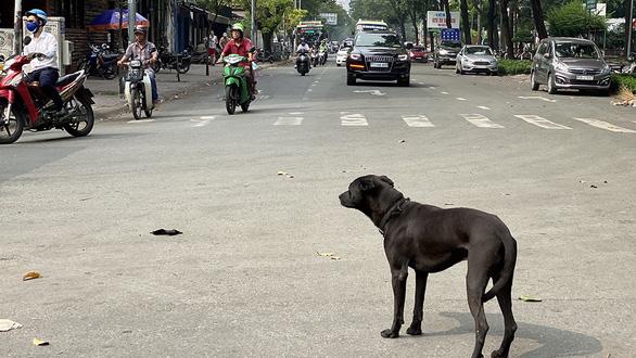 Phát hoảng với chó thả rông trong đô thị - Ảnh 1.