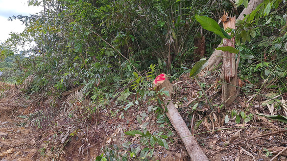 Phá rừng phòng hộ làm đường thi công thủy điện - Ảnh 3.