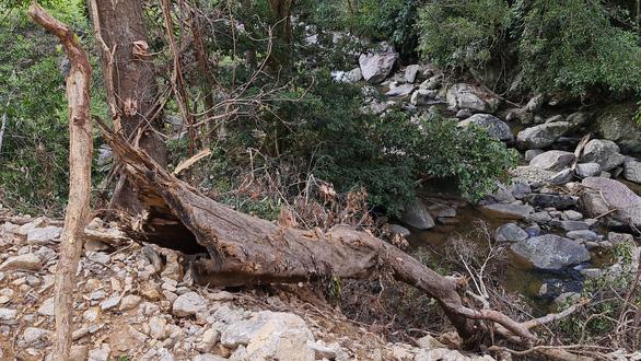 Phá rừng phòng hộ làm đường thi công thủy điện - Ảnh 1.