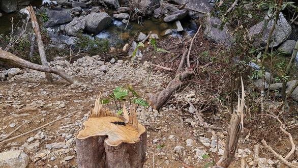 Phá rừng phòng hộ làm đường thi công thủy điện - Ảnh 5.