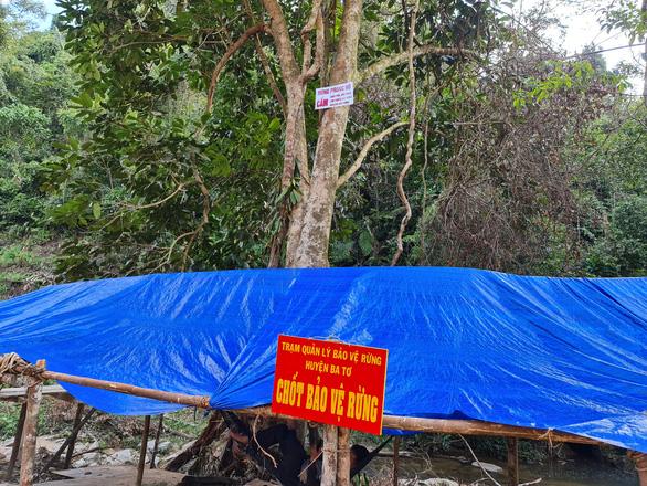 Phá rừng phòng hộ làm đường thi công thủy điện - Ảnh 4.