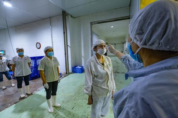 Vải thiều không COVID-19 cháy hàng tại Nhật với giá 340.000 đồng/kg - Ảnh 6.