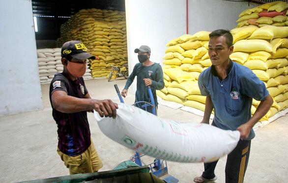 Gạo ST24, ST25 bị đăng ký nhãn hiệu ở Úc, Việt Nam triển khai biện pháp khẩn cấp - Ảnh 1.