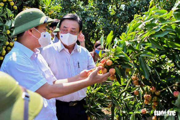 Bắc Giang đề nghị cho xe chở vải thiều đi luồng xanh không cần kiểm dịch - Ảnh 1.