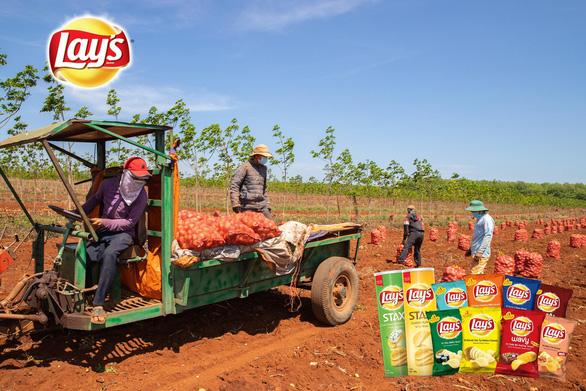 Vụ khoai tây đầu tiên của PepsiCo Việt Nam tại Gia Lai vượt ngưỡng kỳ vọng - Ảnh 5.