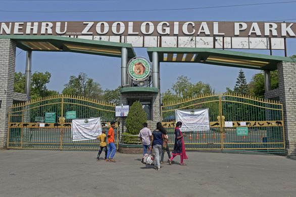 8 con sư tử tại vườn thú Ấn Độ mắc COVID-19? - Ảnh 2.