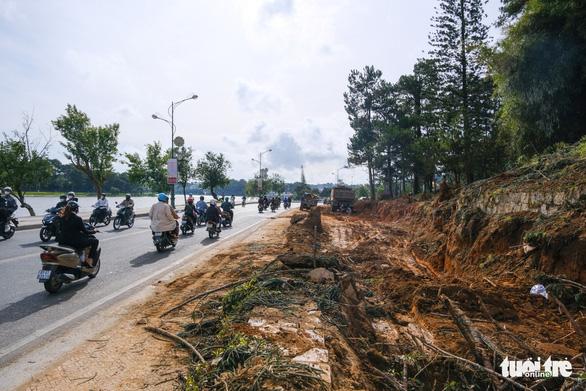 Đà Lạt đốn hạ, di dời hàng loạt cây cổ thụ để mở rộng đường ven hồ Xuân Hương - Ảnh 1.