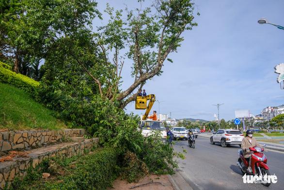 Đà Lạt đốn hạ, di dời hàng loạt cây cổ thụ để mở rộng đường ven hồ Xuân Hương - Ảnh 2.