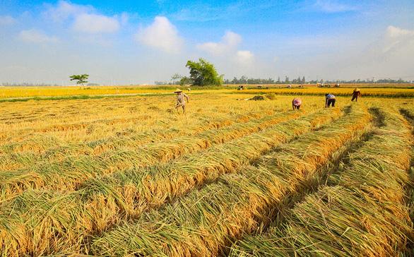 Cúng cơm mới, biết ơn mùa vụ đất đai - Ảnh 1.