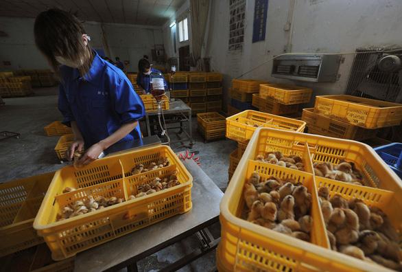 Trung Quốc ghi nhận ca nhiễm virus cúm gia cầm chủng H10N3 đầu tiên trên người - Ảnh 1.