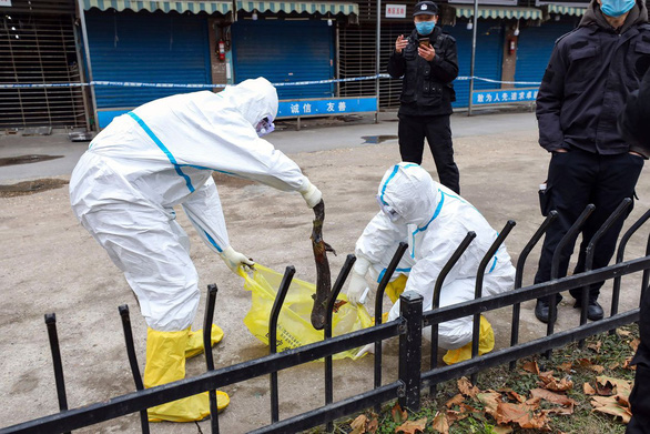 Cựu quan chức Mỹ nói rò rỉ virus không hiếm, giới khoa học Trung Quốc viết thư phản bác - Ảnh 1.