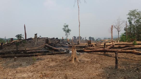Hai đời trưởng ban làm mất hơn 424 hecta rừng phòng hộ - Ảnh 1.