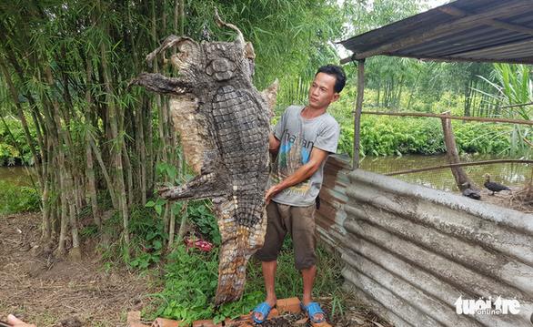 Thấy 5 con cá sấu ở Bình Chánh, mới bắt được 4 - Ảnh 1.