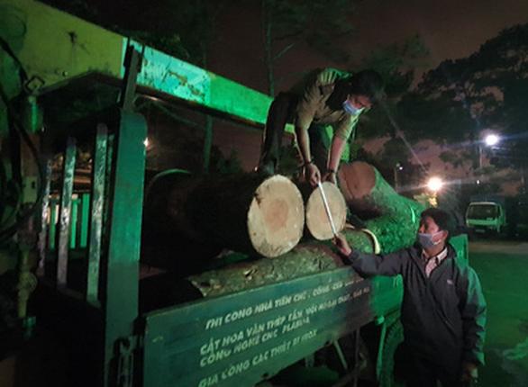Bắt lâm tặc đốn hạ thông cổ thụ trong khu du lịch quốc gia hồ Tuyền Lâm - Ảnh 3.