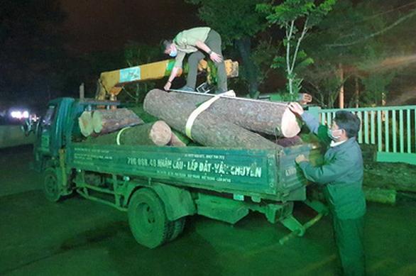 Bắt lâm tặc đốn hạ thông cổ thụ trong khu du lịch quốc gia hồ Tuyền Lâm - Ảnh 1.