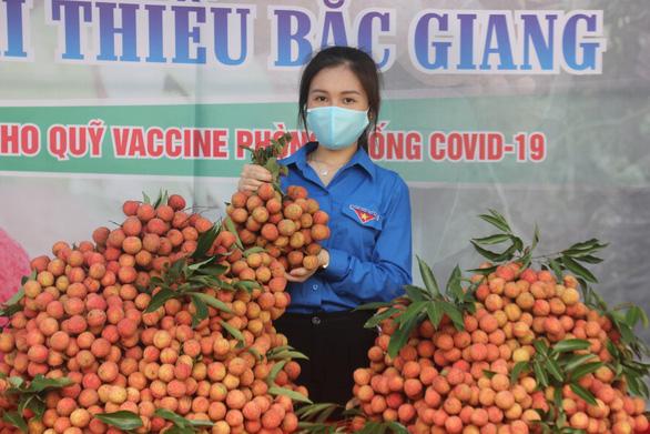 Hàng ngàn 'áo xanh' tình nguyện thu hoạch vải thiều giúp dân xuyên đêm - Ảnh 1.