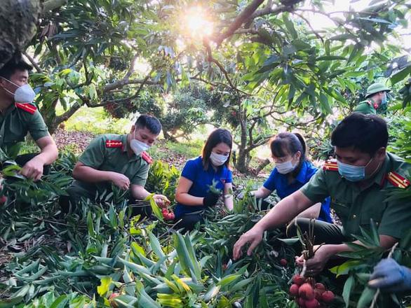 Hàng ngàn 'áo xanh' tình nguyện thu hoạch vải thiều giúp dân xuyên đêm - Ảnh 2.