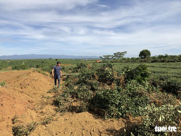 Thêm cán bộ TP Bảo Lộc bị đình chỉ liên quan hiến đất mở đường rầm rộ - Ảnh 2.