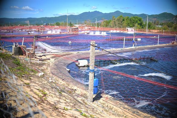 Doanh nghiệp nuôi tôm xả thải đen cả một vùng biển, địa phương nói không biết - Ảnh 3.