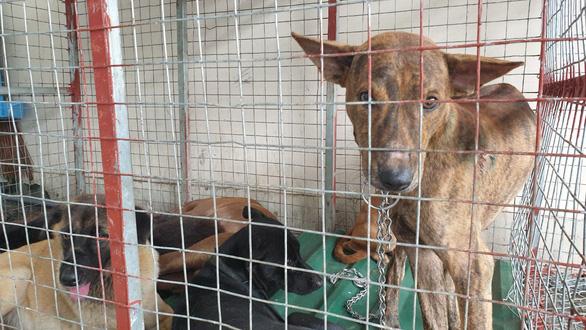 Bắt được trộm chó, công an lên mạng rao tìm chủ cho chó cưng - Ảnh 3.