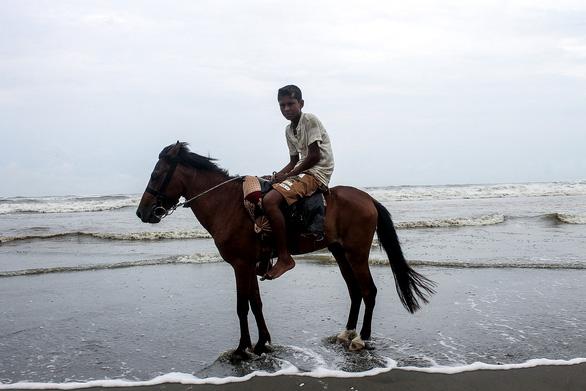 Ngựa thất nghiệp, chết vì không có du khách - Ảnh 1.