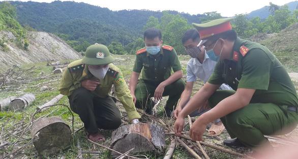 Chủ tịch Mặt trận Tổ quốc xã thuê người chặt hàng trăm cây rừng để làm gì? - Ảnh 3.