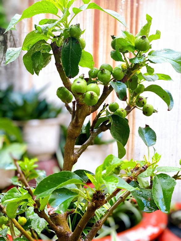 Cây táo xanh tươi gắn kết tình người nơi cách ly giữa Sài Gòn - Ảnh 2.