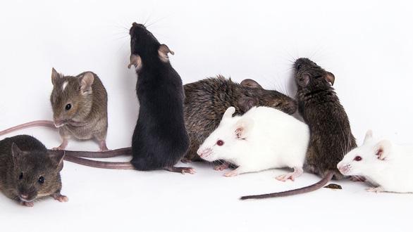 Thí nghiệm thành công khiến chuột đực sinh con - Ảnh 1.