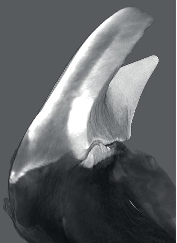 Phát hiện lạ: Sinh vật sống có hàm răng kim loại siêu cứng - Ảnh 2.