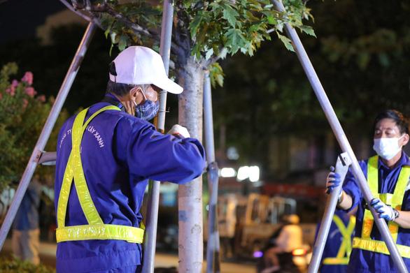 Hà Nội bứng dời hàng phong lá đỏ trong đêm - Ảnh 2.
