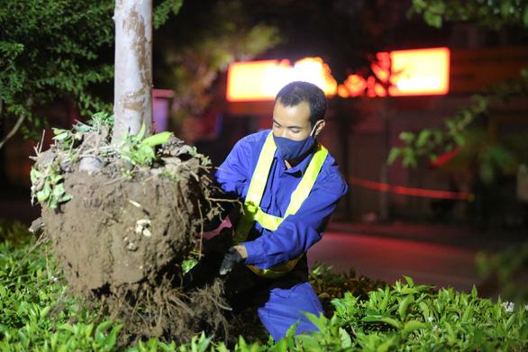 Hà Nội bứng dời hàng phong lá đỏ trong đêm - Ảnh 1.