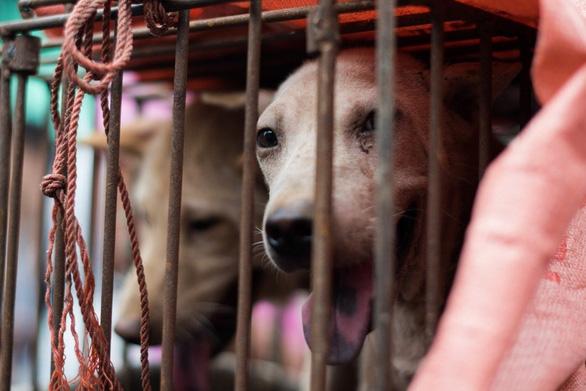 Người Trung Quốc lại tranh cãi về lễ hội thịt chó lớn nhất nước - Ảnh 1.