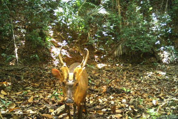 Campuchia lần đầu phát hiện loài mang quý hiếm - Ảnh 1.
