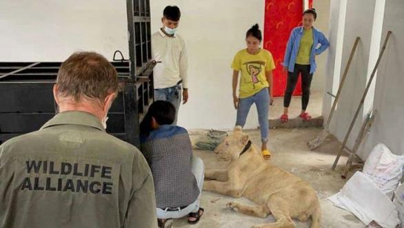 Campuchia bắt người Trung Quốc nuôi sư tử ngay ở Phnom Penh - Ảnh 2.