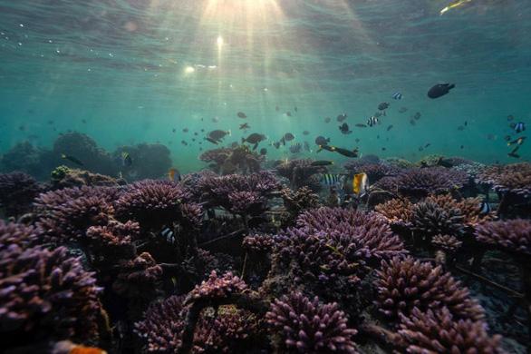 Đảo Bali dời lại kế hoạch mở cửa du lịch - Ảnh 1.