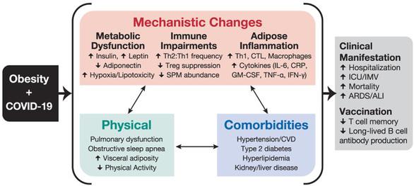 Virus béo phì làm gia tăng nguy cơ COVID-19 đang lợi dụng giãn cách xã hội lẻn vào - Ảnh 2.
