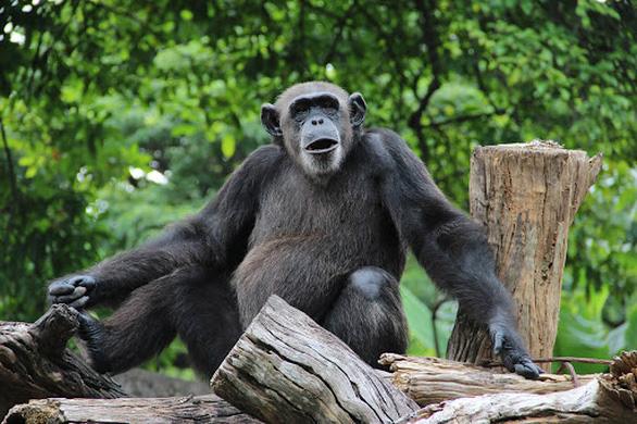 Vườn thú Sri Lanka được yên tĩnh, nhiều động vật có thai lần đầu - Ảnh 2.