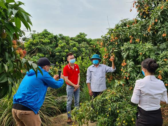 Mục tiêu bán 100 tấn vải thiều Bắc Giang trên Sendo - Ảnh 1.