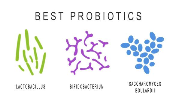 Men vi sinh 19 chủng - cho hệ tiêu hóa của trẻ luôn khỏe mạnh - Ảnh 1.