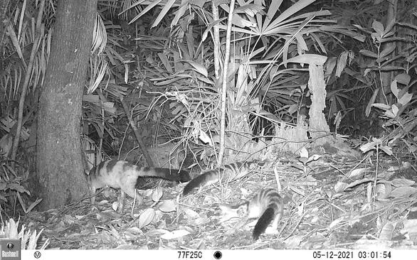 Việt Nam phát hiện loài mang quý hiếm tưởng tuyệt chủng - Ảnh 5.