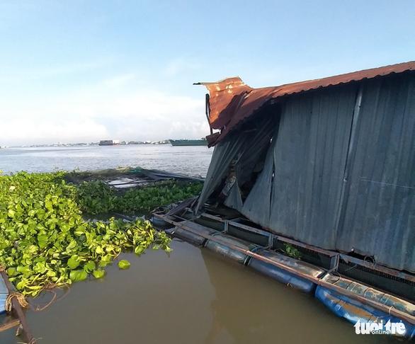 Sà lan tông chìm 2 bè cá chuẩn bị thu hoạch trên sông Tiền - Ảnh 3.