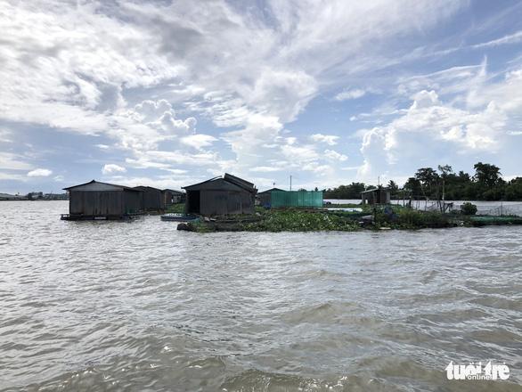 Sà lan tông chìm 2 bè cá chuẩn bị thu hoạch trên sông Tiền - Ảnh 1.