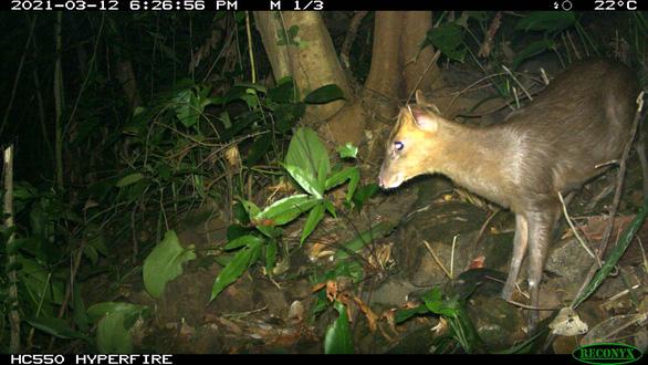 Việt Nam phát hiện loài mang quý hiếm tưởng tuyệt chủng - Ảnh 1.
