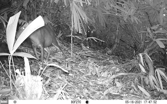 Việt Nam phát hiện loài mang quý hiếm tưởng tuyệt chủng - Ảnh 3.