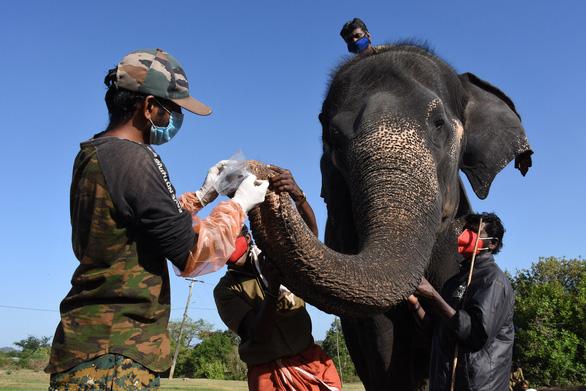 nơi xét nghiệm 28 con voi, nơi xét nghiệm 21 con hổ - Ảnh 1.