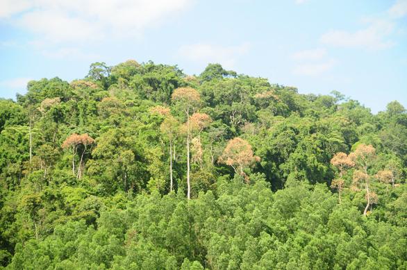 Rừng ươi náo động, người dân và kiểm lâm lập lán chốt chặn ở cửa rừng - Ảnh 6.