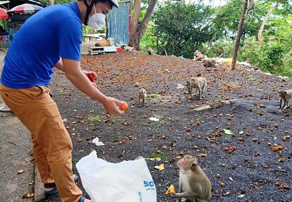 Vũng Tàu tiếp tế trái cây cho khỉ để dụ chúng về lại núi - Ảnh 1.
