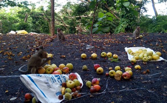 Vũng Tàu tiếp tế trái cây cho khỉ để dụ chúng về lại núi - Ảnh 2.